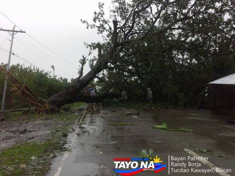 Uprooted Tree at Kawayan Biliran
